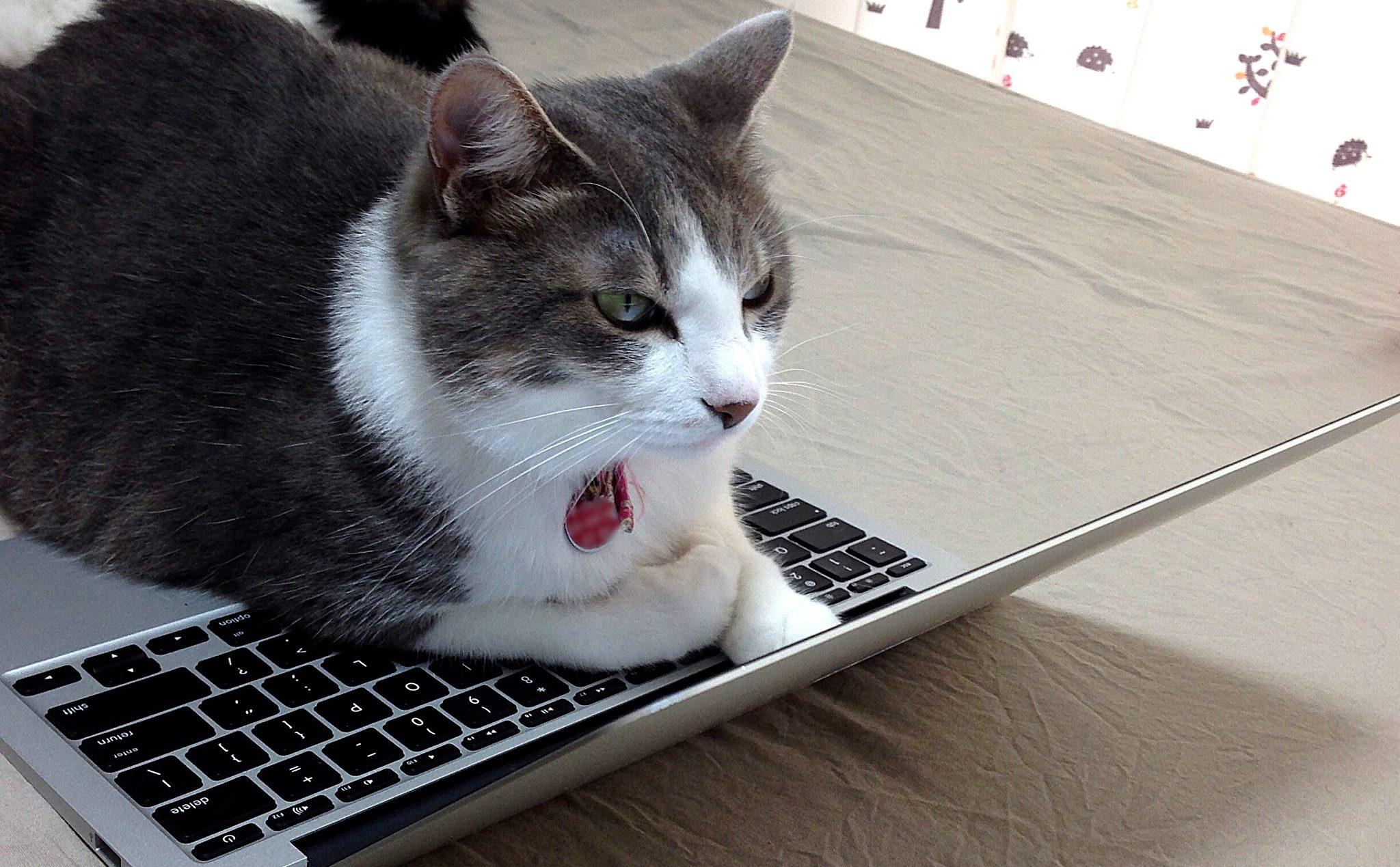 猫がMacを注視している