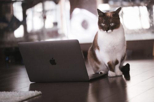パソコンをじっと眺めるエンジニア猫